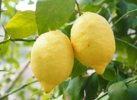 Il Limone o citrus limon è un ottimo antisettico contro diarrea e mal di gola!